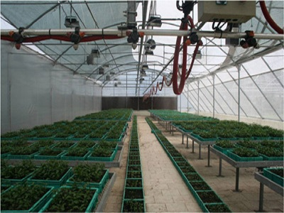 Production of Orange Seedling inside Hi-Tech Greenhouse, Sikkim
