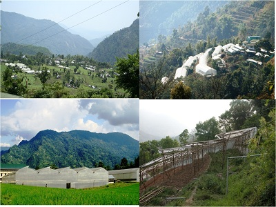 Cluster of Greenhouses with Tubular and Bamboo Structures, Sikkim