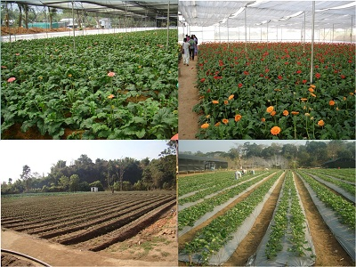 Model Floriculture Centre / Horticulture Hub, Meghalaya