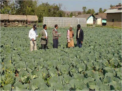 Cabbage at Bishnupur, Manipur